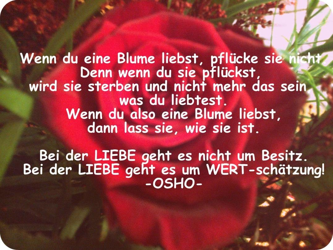 Liebe und Wertschätzung OSHO